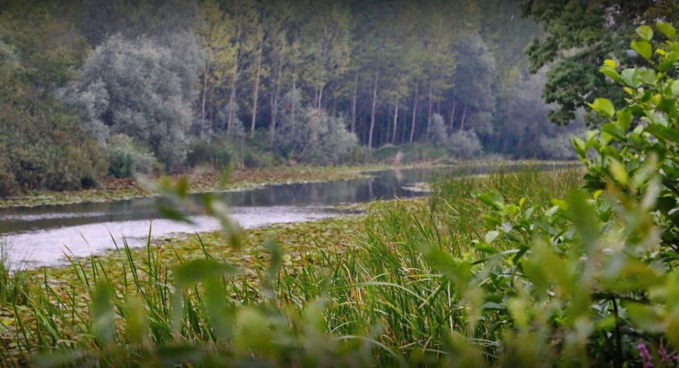 Acarlar Longoz Ormanı